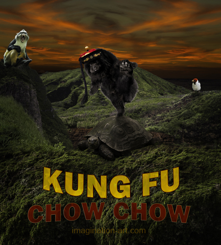 Kung Fu Chow Chow